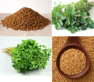 Methi-or-Fenugreek-Benefits seeds and leaves