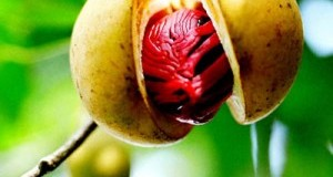 9 Nutmeg (Jathikka) Health Benefits Which Can Surprise You