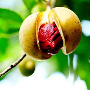 Nutmeg (Jathikka)