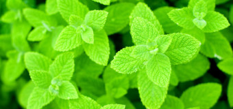 Mint Leaves – One Of The Oldest Seasoning And Flavoring Agent