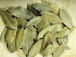 """'Indian Bay leaf"""""""