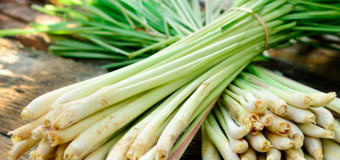 Lemongrass oil – An oil with healing power