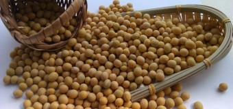 Soya Bean – Wonder Bean – Meat Without Bone For Alzheimer's