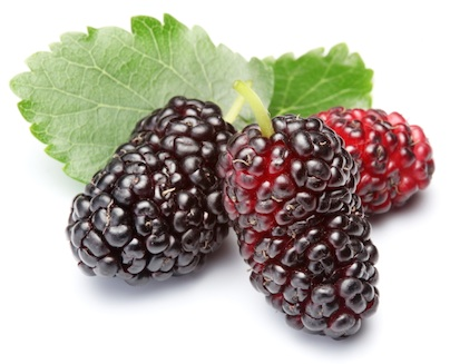 Mulberries fruits