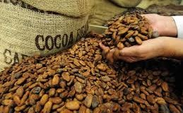 Do you want to reduce your blood pressure??? Here it is-cocoa