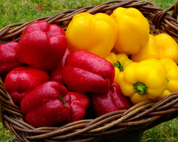 Capsicum-red peppers in cookking