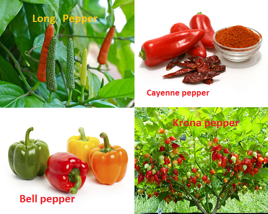 Nature Loc different varies of peppers-bell pepper kron-long-caynne peppers
