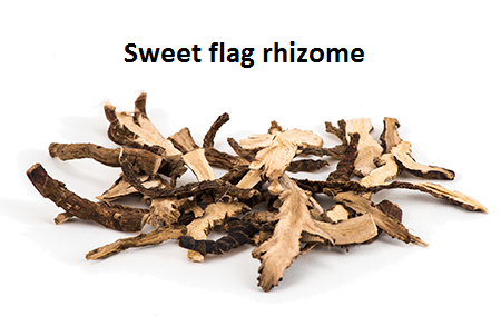 Sweet flag rhizome
