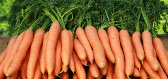 What's the benefit of having crunchy and nutritious roots called carrots?