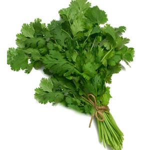 coriander-fresh-leavesnatureloc