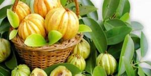 garcinia-cambogia- kodampuli-helath benefits