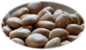 jackfruit-seeds-jackfruit flour