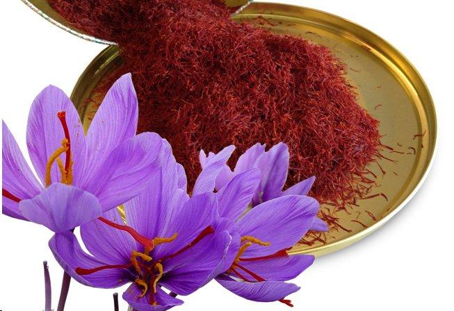 saffron flower and saffron perfumes