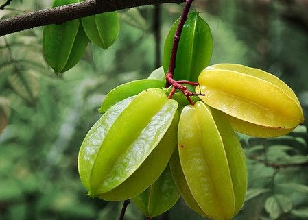 star fruits that prevents cancer-heart strokes