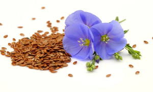 Flax seeds flower uses medicinal values