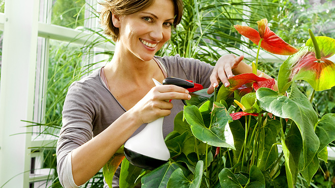 Spraying-plants with hydrogen peroxide