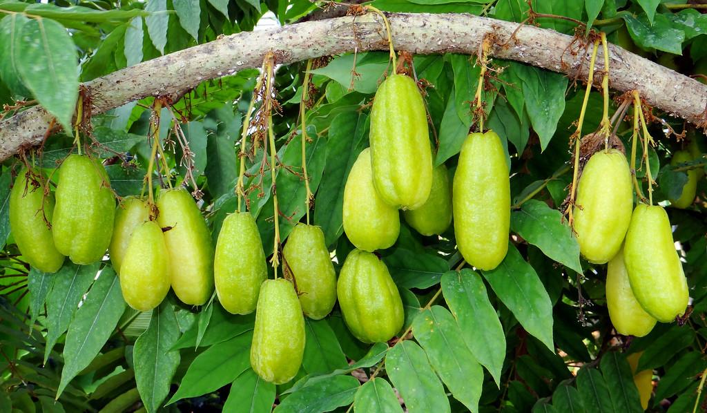 bimbli fruit health benefits souring agents