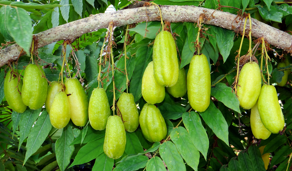 Souring Agents - Sour Truth in Kerala Cuisine ...