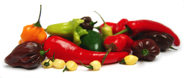 chillies varities weight loss techiques