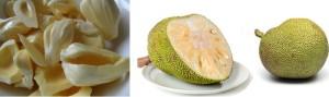 Mature jakcfruit or unripe jackfruits