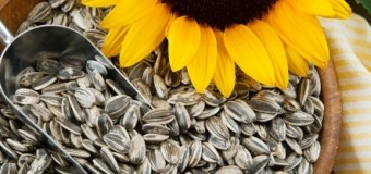 Sunflower seeds – Let the Sun Shine In