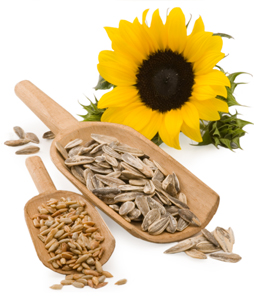 sunflower-seeds uses health benefits