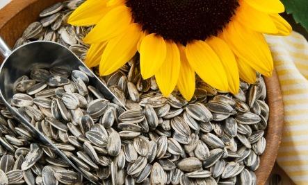sunflower seeds uses