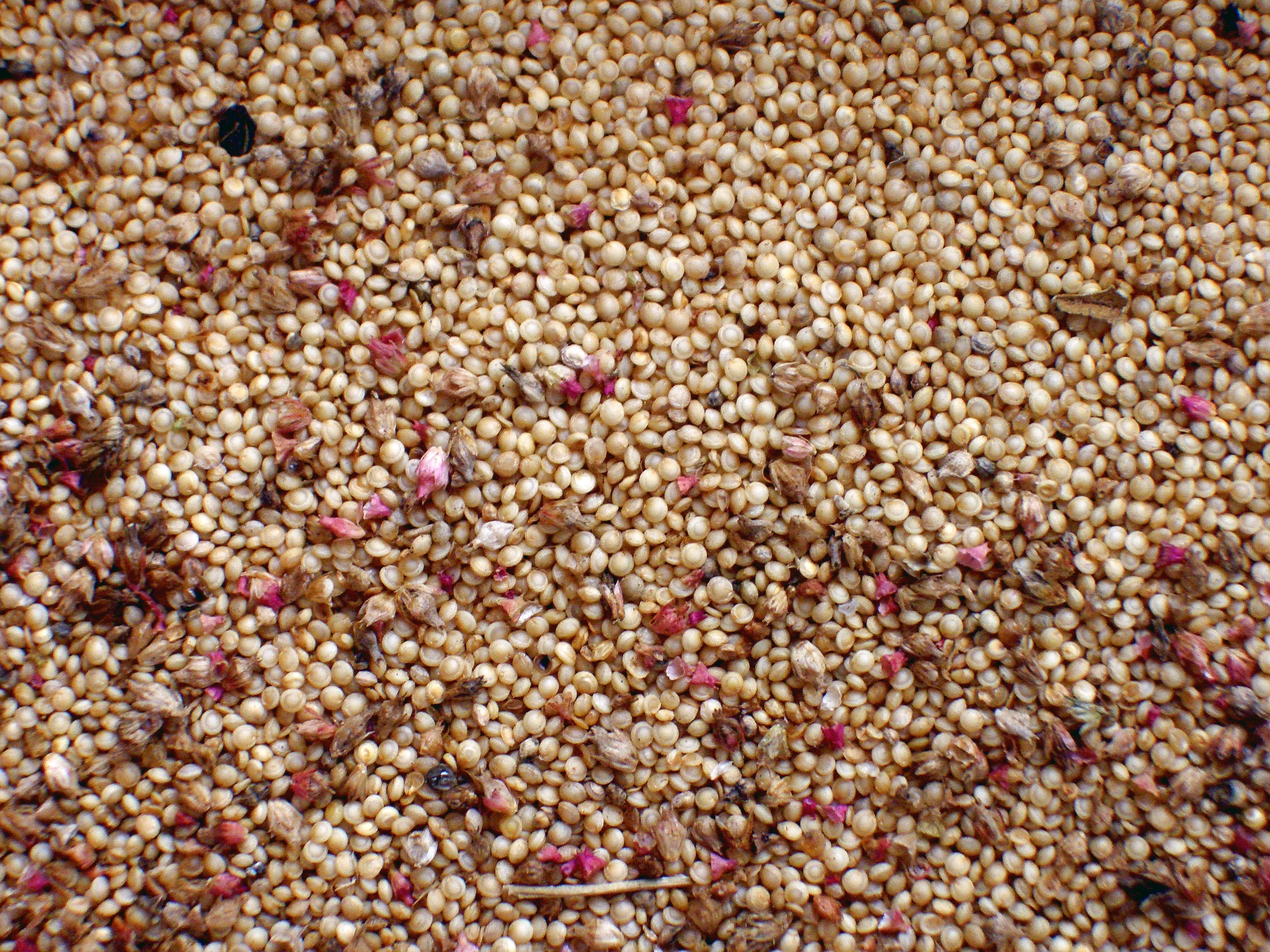 Seeds Nutritious Super Food Recommended By Dietitians