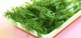 Dill – calm or soothe medicinal herb