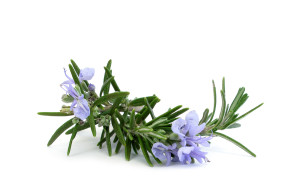 Rosemary leaves and flower