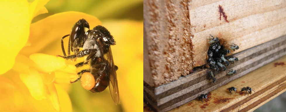 CheruThen (Small Honey) - Stingless Bee honey