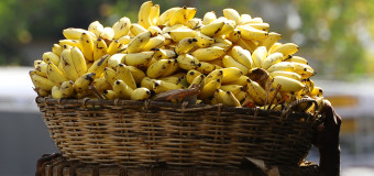 Banana – Golden Fruit – Nature's secret of perpetual youth