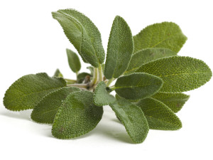 sage leaf health benefits