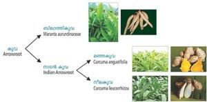 Koova classifications natureloc