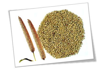 Pearl millets buy online natureloc