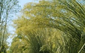 bamboo rice mulayari buy online