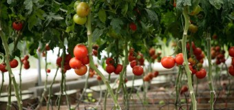 What is Organic food? Why organic food is healthier choice ?