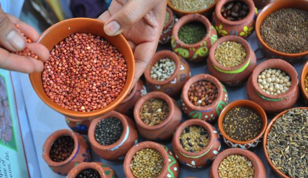 Pearl millet, Barnyard millet, Sorghum, Foxtail millet, Little millet, Kodo millet, Proso millet