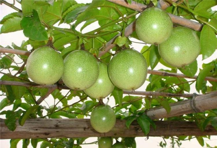 Natureloc Passion Fruits health benefits