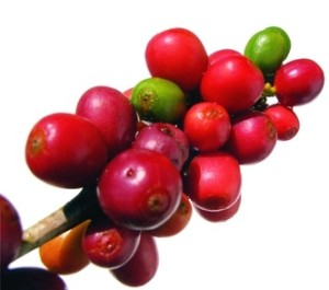 Red and green coffee beans