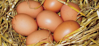 Eggs – Role of eggs in your diet