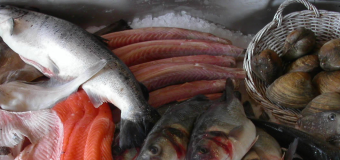 Why fish and shellfish are recommended as an important part of the diet?