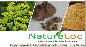 Kayam - asafoetida - hing - A common culinary herb for flavouring