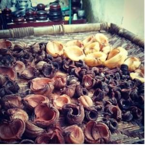 Natureloc kudampuli kodampuli home drying garcinia cambogia