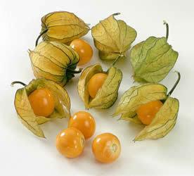 cape_gooseberry golden berry natureloc