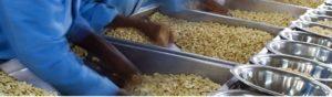 Cashew nuts types - Cashew Kernels varieties