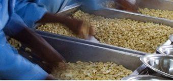 Cashew nuts types – Cashew Kernels varieties