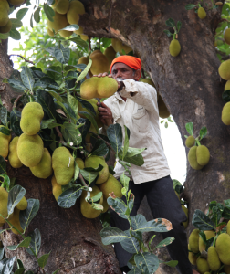 How can we minimize the wastage of jackfruit?