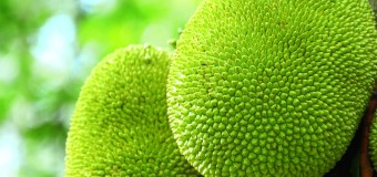 Jackfruits Nutritional compositions