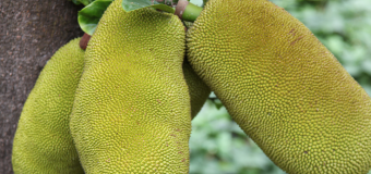 Jackfruit products – Kitchen friendly products with no preservatives